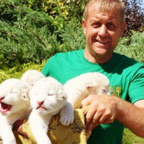 В сафари-парке «Тайган» родился белый львенок